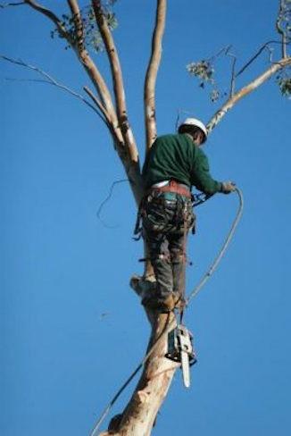 Tree Removal Durham NC
