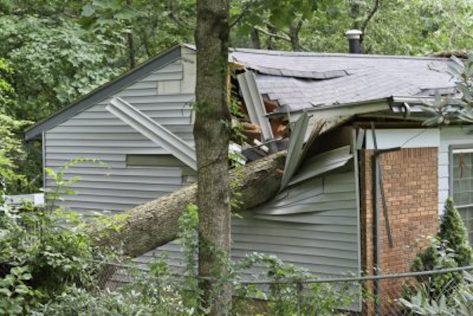 Emergency Tree Care Durham NC