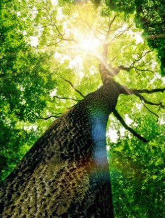 Tree Care Services Durham NC
