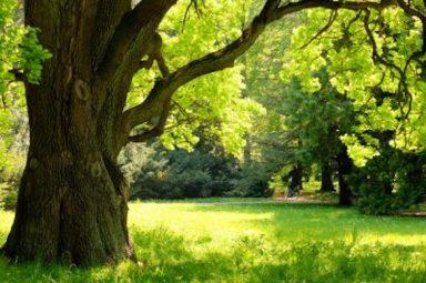 Tree Service Durham NC