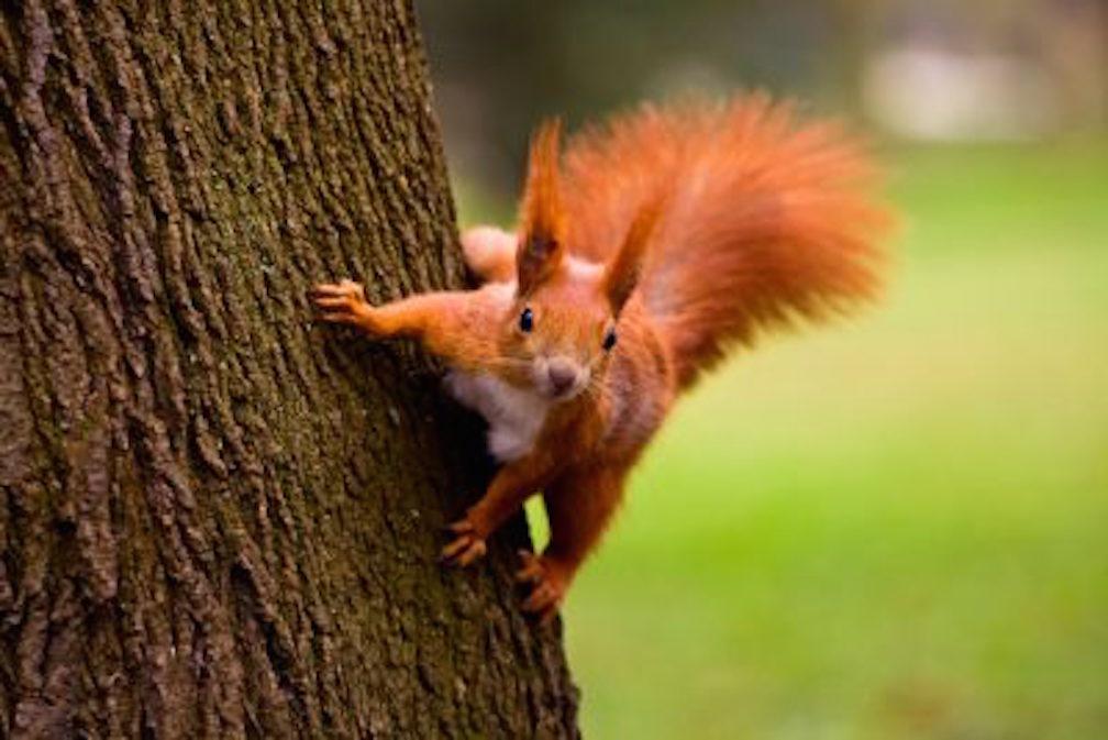 contact durham tree service