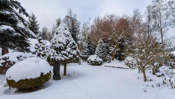 Winter Tree Care Ideas