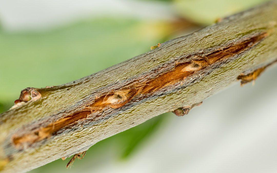 Tree Wound Repair