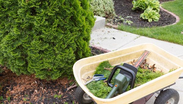 Durham Tree Service when to trim evergreen bushes