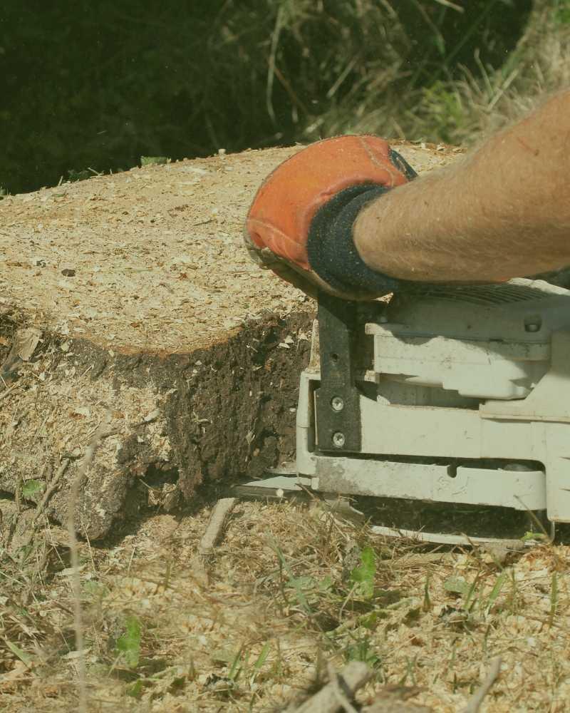 best stump removal near me durham nc