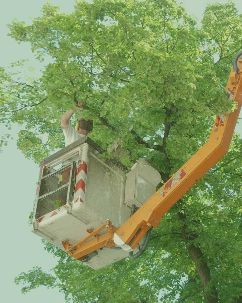 best tree cutting service durham nc