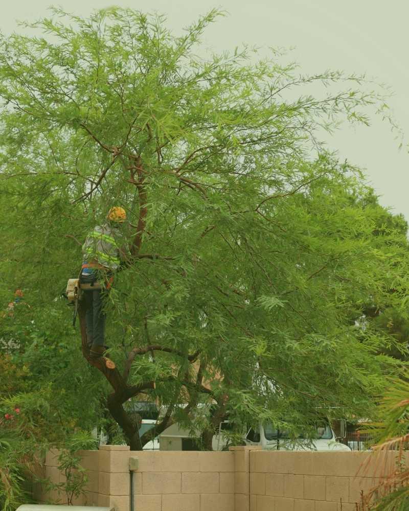 best tree pruning service durham nc