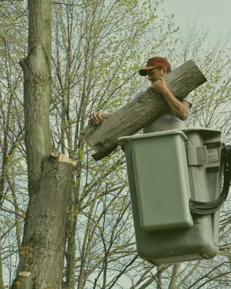 durham nc tree removal
