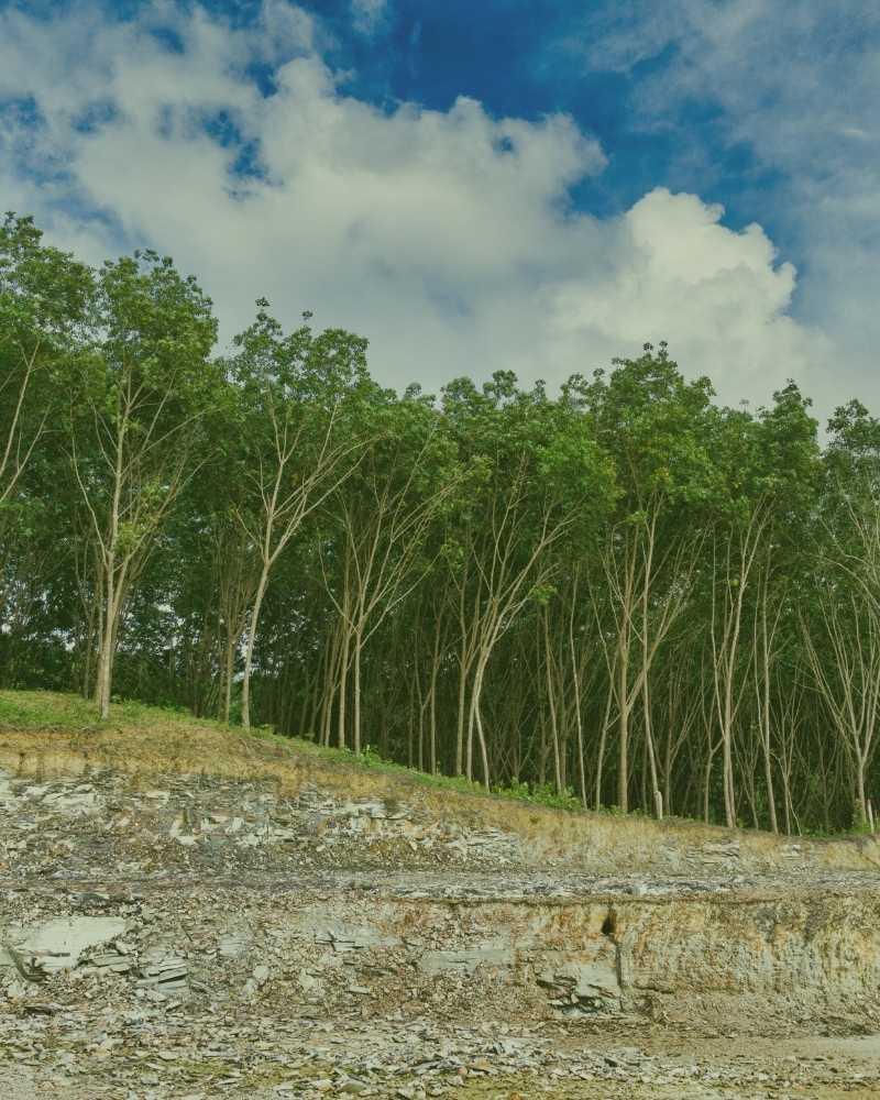land clearing near me durham nc