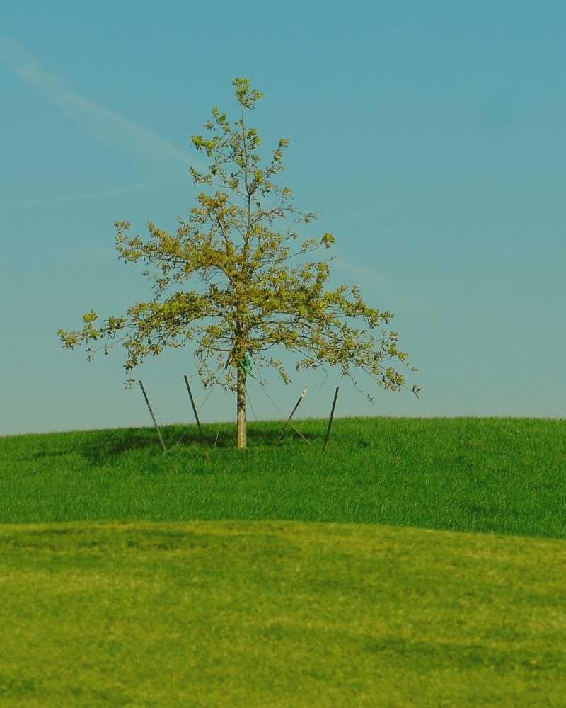 tree cabling durham nc