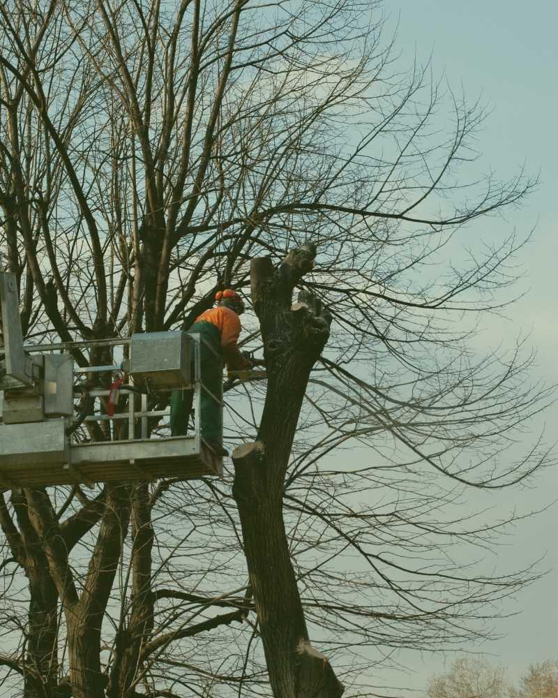 tree pruning service durham nc