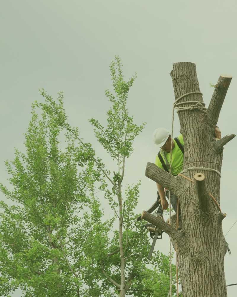 tree service apex nc