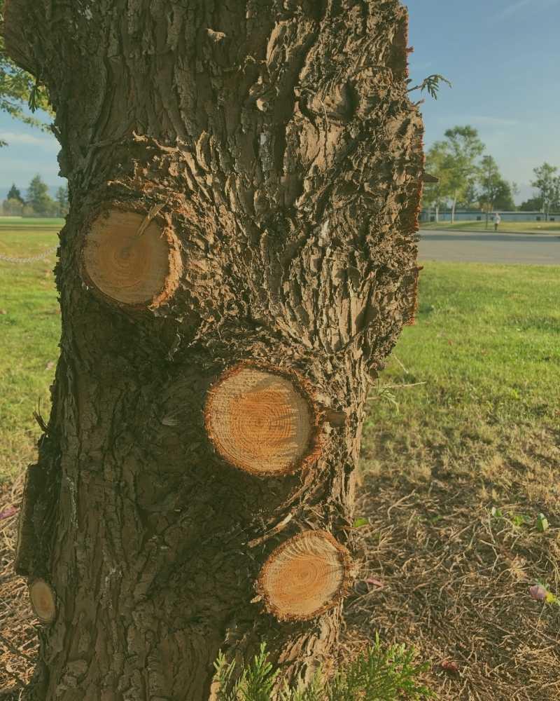 tree trimming near me durham nc