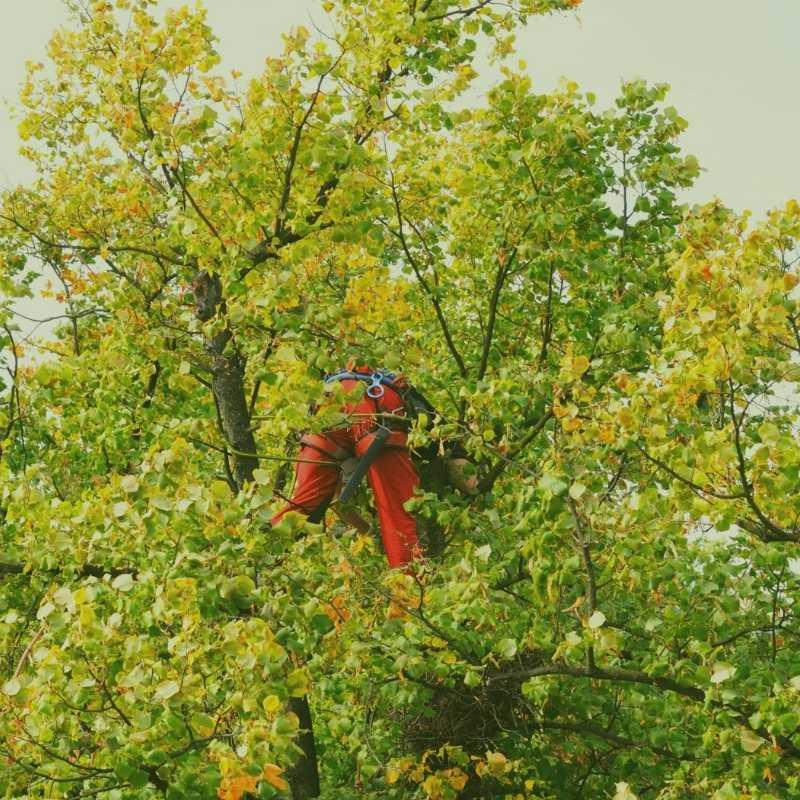 Holly Springs Tree Service