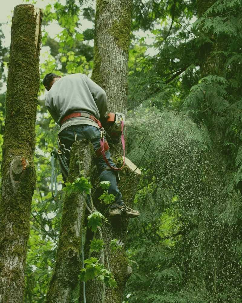 Moncure Tree Service