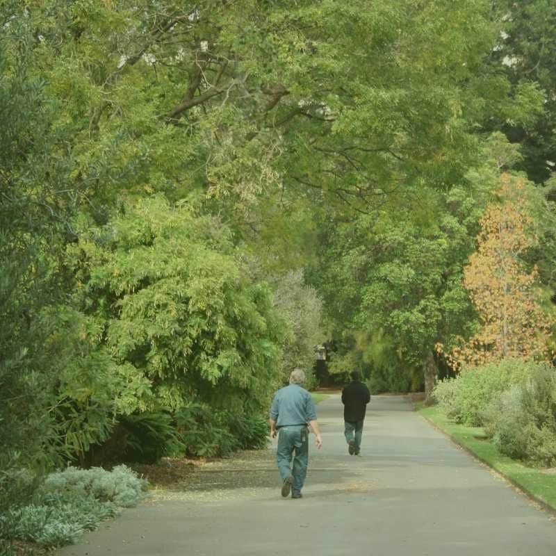 Morrisville Tree Service